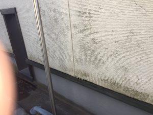 外壁にカビコケ発生
